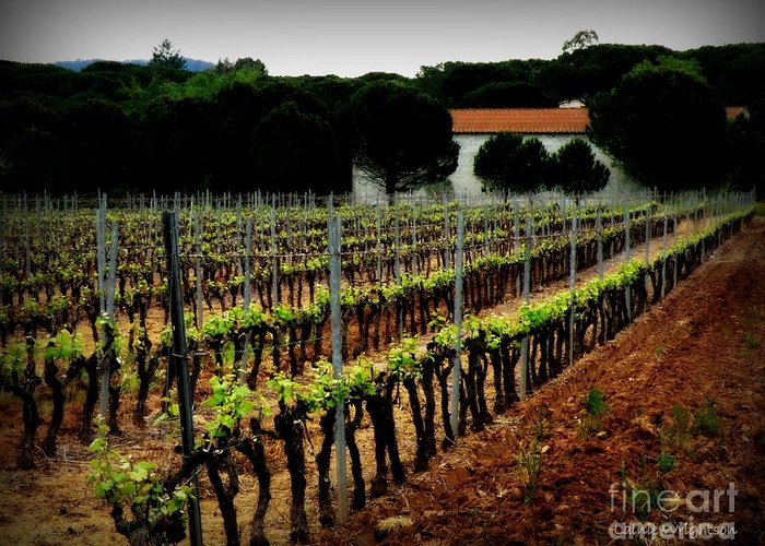 Vineyard Greeting Card featuring the photograph Provence Vineyard by Lainie Wrightson