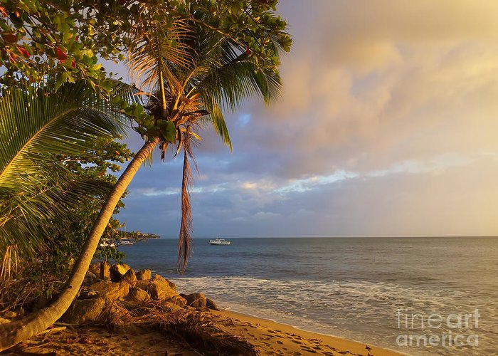 Sunset Greeting Card featuring the photograph Puerto Rico Palm Lined Beach With Boat At Sunset by Jo Ann Tomaselli