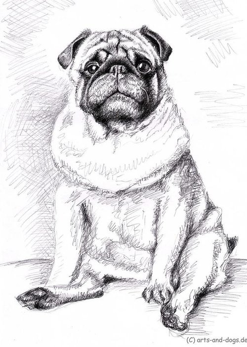 Dog Greeting Card featuring the drawing Pug Anton by Nicole Zeug