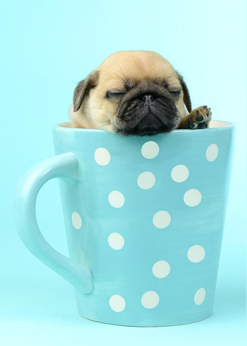 Asleep Greeting Card featuring the photograph Pug In A Cup by Greg Cuddiford