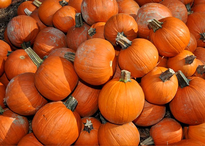 Pumpkin Photography Greeting Card featuring the photograph Pumpkins by Diane Lent