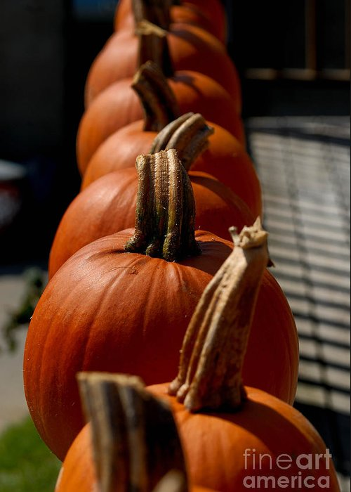 Autumn Greeting Card featuring the photograph Pumpkins In A Row by Amy Cicconi
