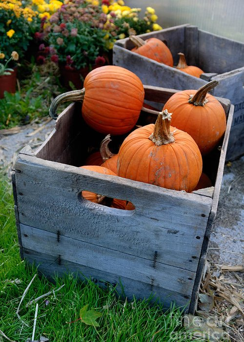 Pumpkin Greeting Card featuring the photograph Pumpkins In Wooden Crates by Amy Cicconi