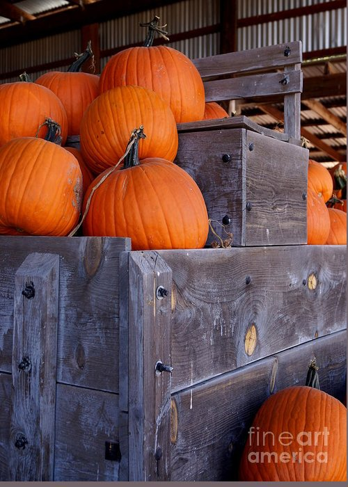 Farm Greeting Card featuring the photograph Pumpkins On The Wagon by Kerri Mortenson