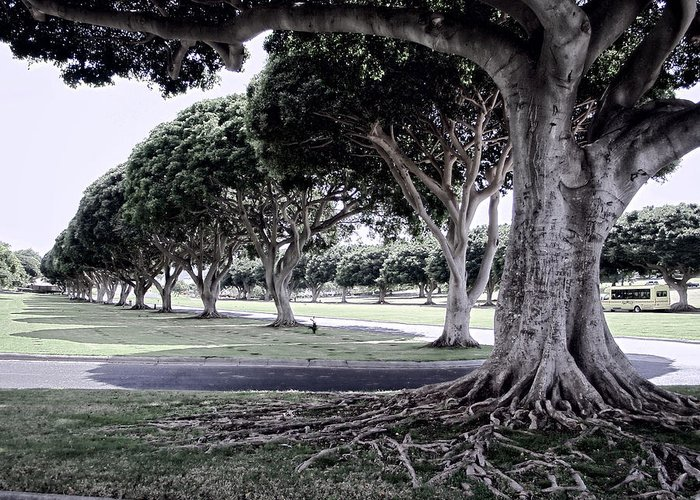 Punchbowl Greeting Card featuring the photograph Punchbowl Cemetery - Hawaii by Daniel Hagerman
