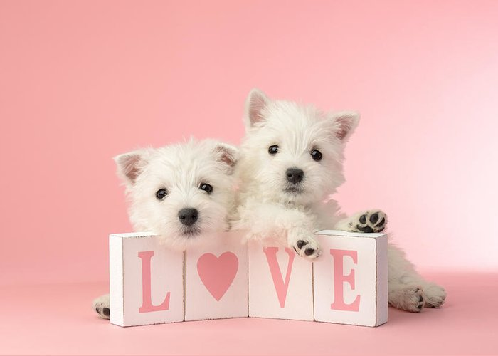 White Greeting Card featuring the photograph Puppy Love by Greg Cuddiford
