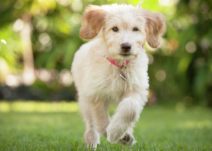 Pets Greeting Card featuring the photograph Puppy Running Through The Grass by Chris Stein