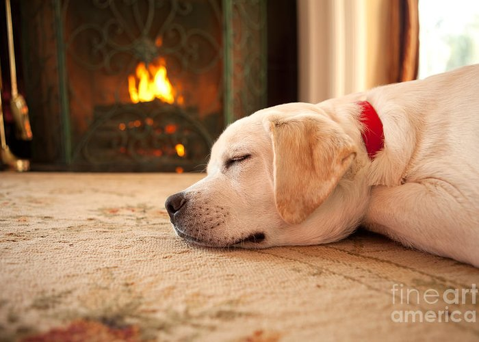 Puppy Greeting Card featuring the photograph Puppy Sleeping By A Fireplace by Diane Diederich