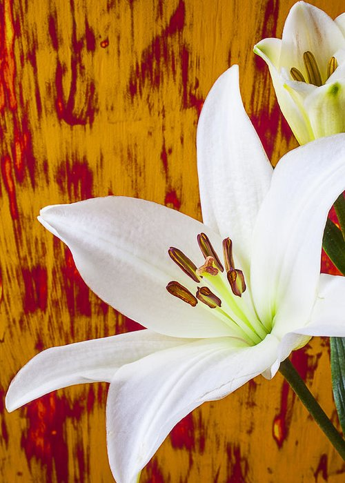 White Lily Greeting Card featuring the photograph Pure White Lily by Garry Gay