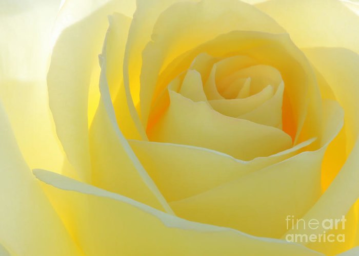 Macro Greeting Card featuring the photograph Purity by Sabrina L Ryan