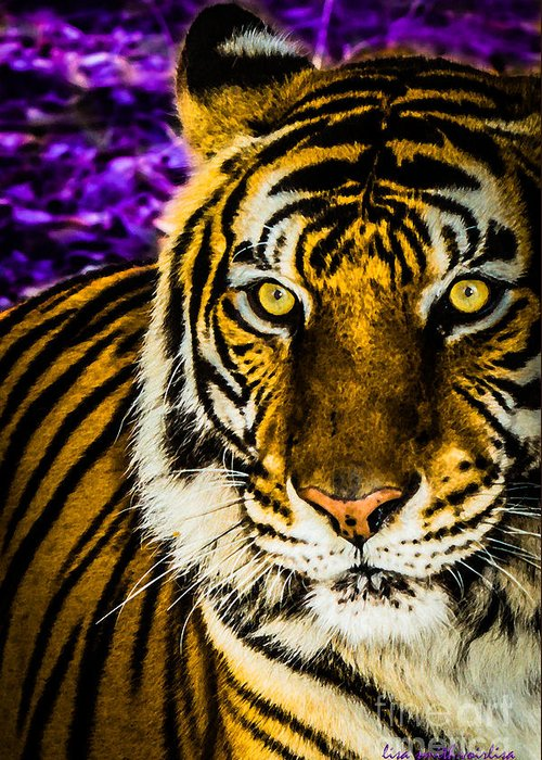 Tiger Greeting Card featuring the photograph Purple And Gold Tiger by Lisa Smith