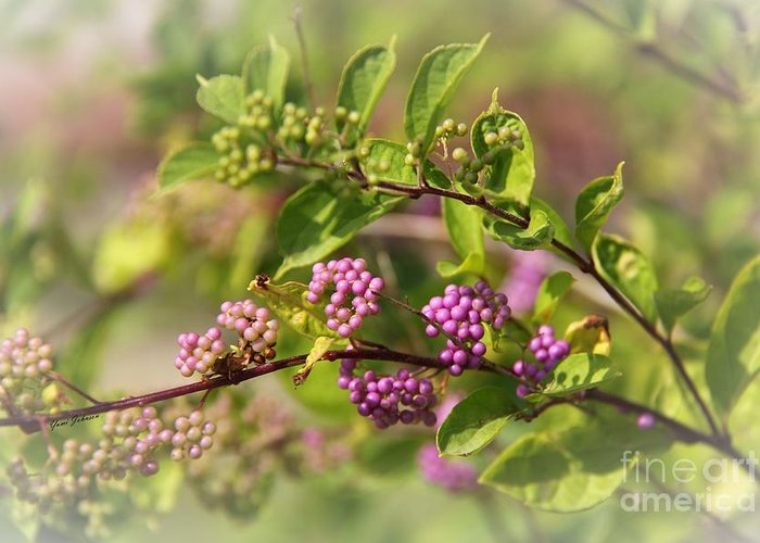 Purple Berries Greeting Card featuring the photograph Purple Berries by Yumi Johnson