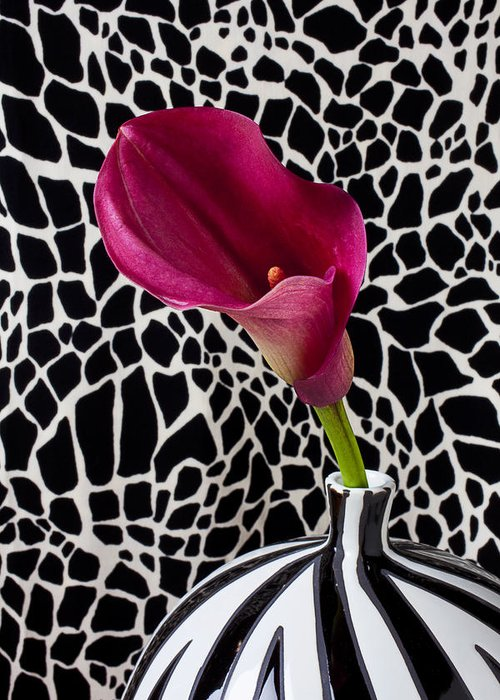 Purple Calla Lily Greeting Card featuring the photograph Purple Calla Lily by Garry Gay