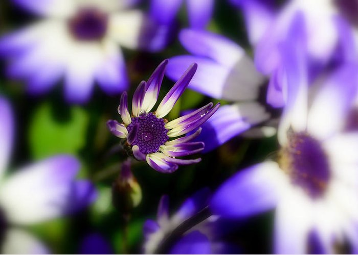 Purple Greeting Card featuring the photograph Purple Flowers by Barbara Walsh