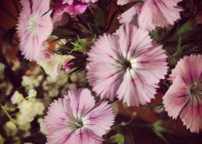 Style Greeting Card featuring the photograph #purple #flowers #ihavenoclue #pretty by Amber Campanaro