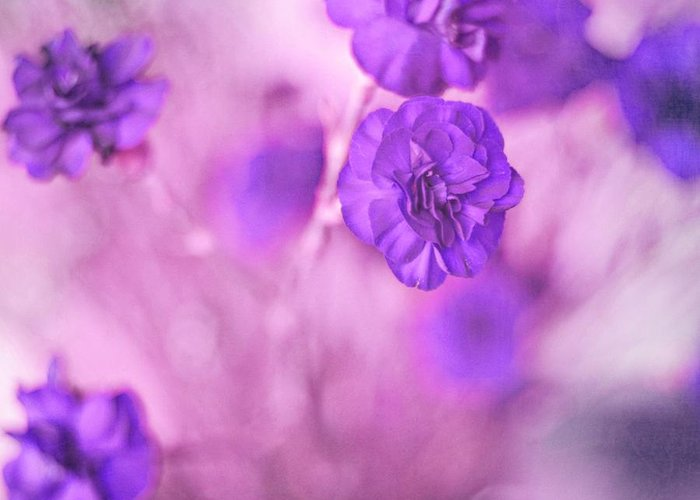 Pretty Flowers Greeting Card featuring the photograph Purple Flowers by Marisa Horn