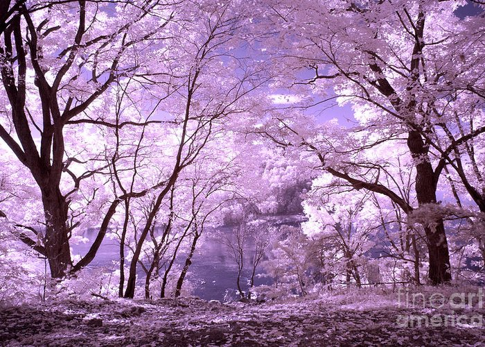 Infrared Greeting Card featuring the photograph Purple Forest by Paul W Faust - Impressions of Light