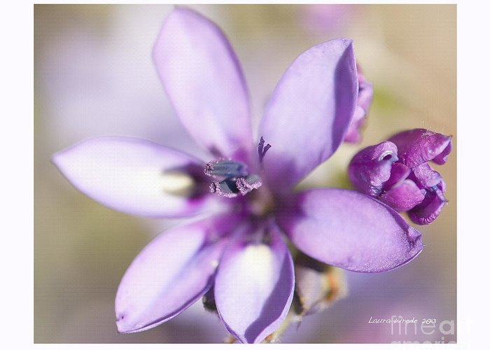 Purple Geranium Greeting Card featuring the photograph Purple Geranium 2 by Artist and Photographer Laura Wrede