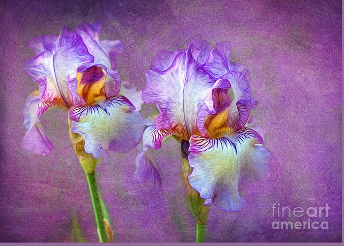 Iris Greeting Card featuring the photograph Purple Iris by Lena Auxier