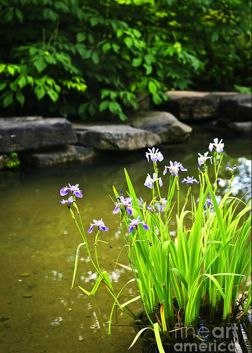 Garden Greeting Card featuring the photograph Purple Irises In Pond by Elena Elisseeva