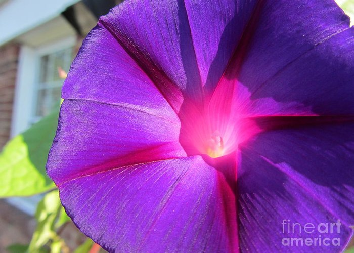 Flower Greeting Card featuring the photograph Purple Morning Glory - Flower by Susan Carella