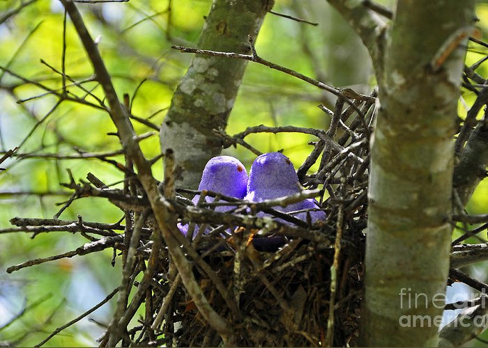 Peeps Greeting Card featuring the photograph Purple Peeps Pair by Al Powell Photography USA