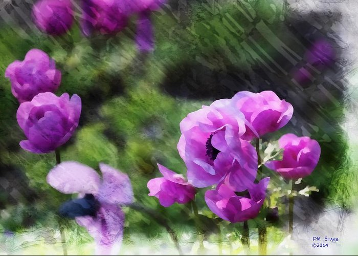 Purple Greeting Card featuring the photograph Purple Poppy by PM Staab