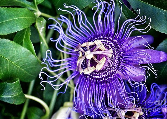 Flowers Greeting Card featuring the photograph Purple Power by Tami Martin