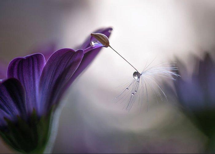 Macro Greeting Card featuring the photograph Purple Rain by Silvia Spedicato
