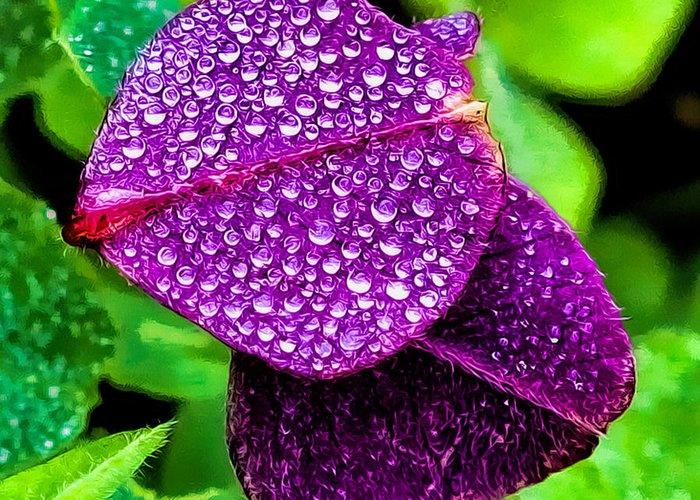 Clover Canvas Print Greeting Card featuring the photograph Purple Shimmer by Lucy VanSwearingen