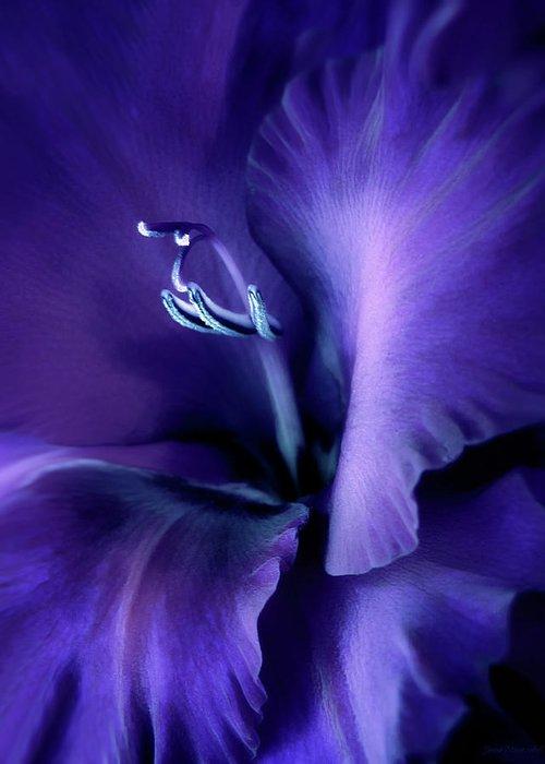 Purple Gladiolas Greeting Cards