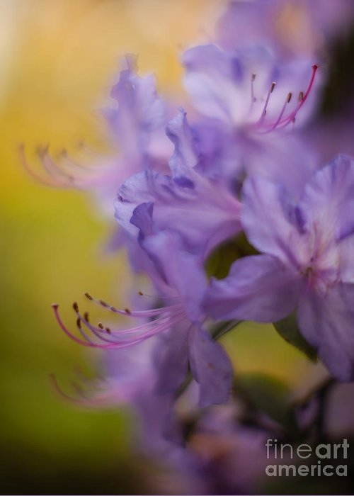 Flower Greeting Card featuring the photograph Purple Whispers by Mike Reid
