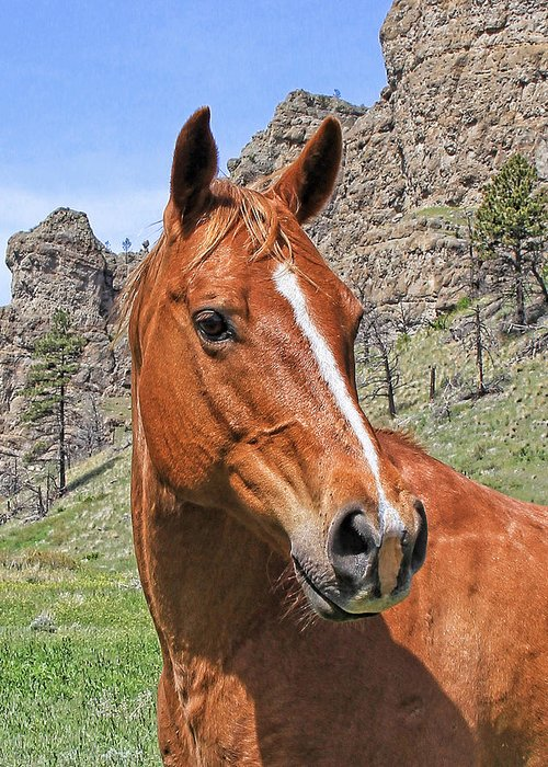 Horse Greeting Card featuring the photograph Quarter Horse Portrait Montana by Jennie Marie Schell