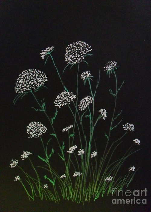 Queen Ann's Lace Greeting Card featuring the drawing Queen Anns Lace by Ginny Youngblood