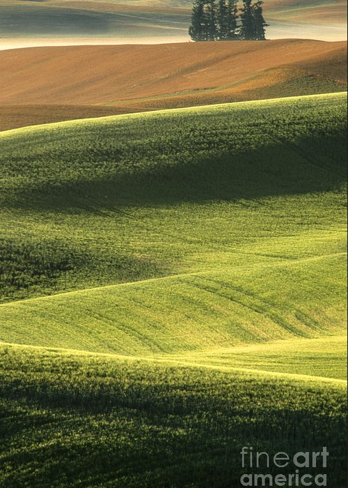Landscape;farmland;rural;palouse;countryside;country;trees;hills;rolling;vertical;green;summer;mist;fog;haze;scenic;scenics;landscapes;sunrise;bucolic;sandra;bronstein;fine;art;photography;abstract;abstracts;pattern;patterns;pullman;washington;iconic;western;united;states;america;out West;travel;tourism;tranquil;harvest;peaceful; Greeting Card featuring the photograph Quiet Morning In The Palouse by Sandra Bronstein