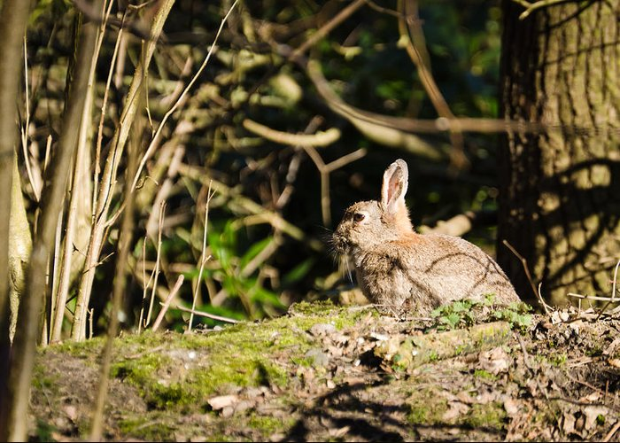 Animal Greeting Card featuring the photograph Rabbit In The Woods by David Head