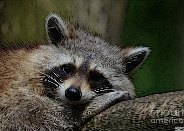 Racoon Greeting Card featuring the digital art Racoon by Richard Dussault