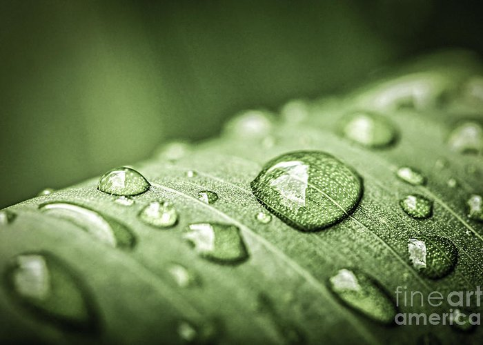 Plant Greeting Card featuring the photograph Rain Drops On Green Leaf by Elena Elisseeva