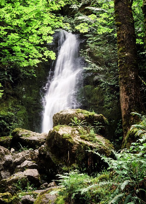 Quinault Greeting Card featuring the photograph Rain Forest Falls by Kelley King