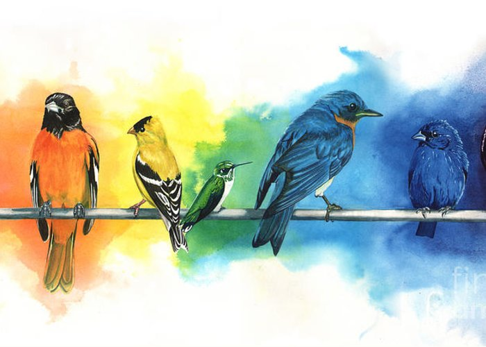 Oriole Greeting Cards