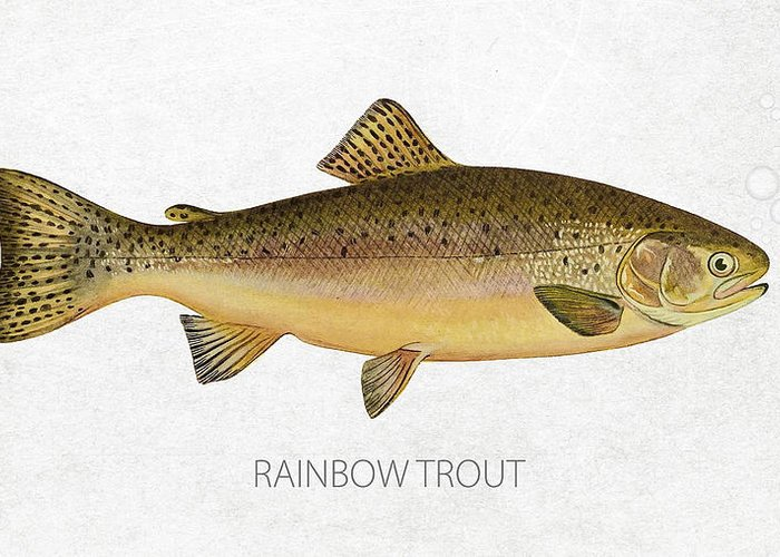 Oncorhynchus Greeting Cards
