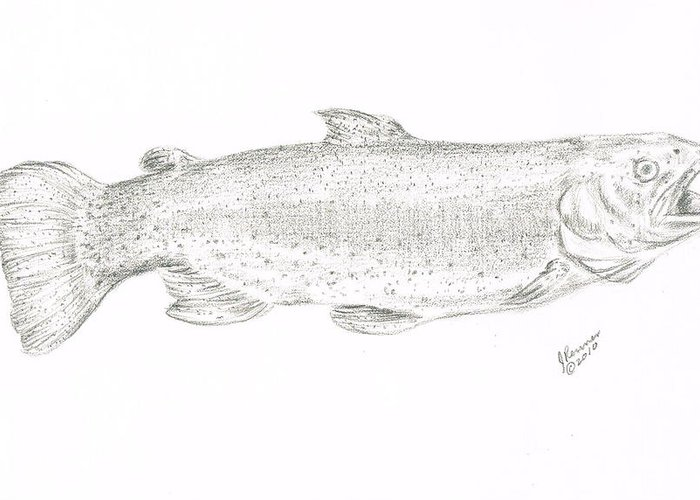 Trout Greeting Card featuring the drawing Rainbow Trout by Joann Renner