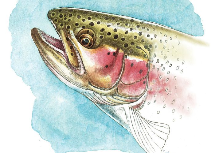 Jon Q Wright Greeting Card featuring the painting Rainbow Trout Study by JQ Licensing