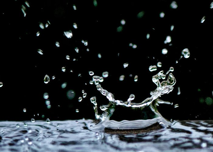 Lisa Knechtel Greeting Card featuring the photograph Raindrop by Lisa Knechtel
