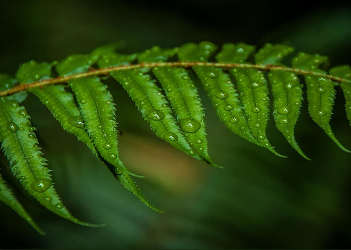 Forest Greeting Card featuring the photograph Rainfall On Leaf by Puget Exposure