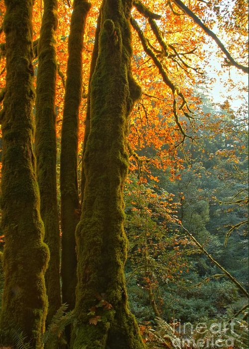 Oregon Rainforest Greeting Card featuring the photograph Rainforest Orange by Adam Jewell