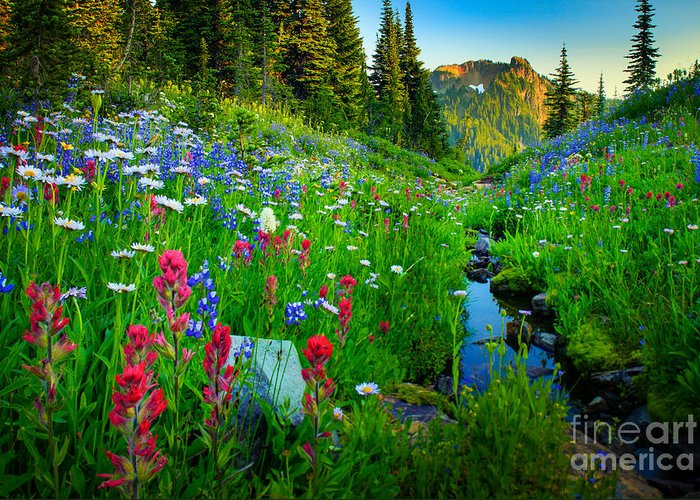 America Greeting Card featuring the photograph Rainier Wildflower Creek by Inge Johnsson