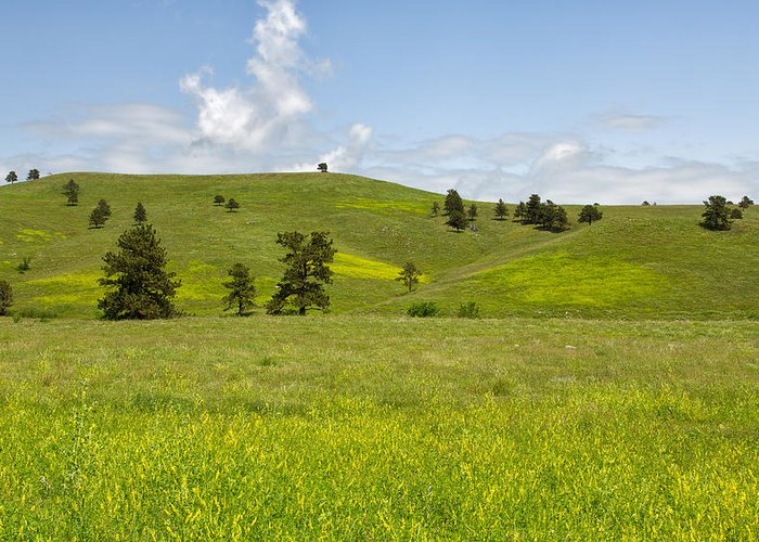 Tree Greeting Card featuring the photograph Rangelands Of Custer State Park by John M Bailey