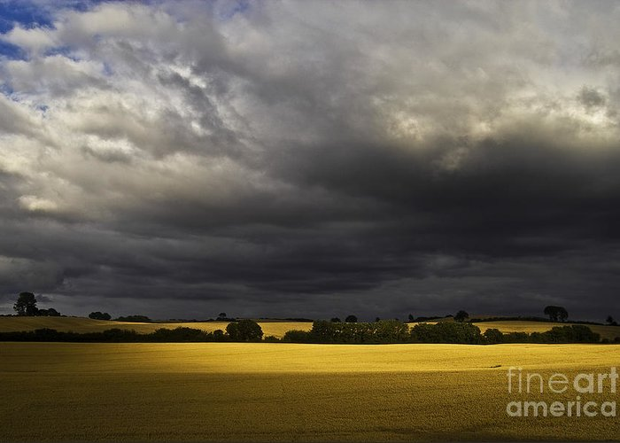 Rapefield Greeting Card featuring the photograph Rapefield Under Dark Sky by Heiko Koehrer-Wagner