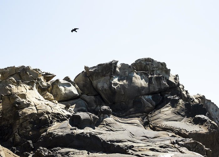 Tafoni Greeting Card featuring the photograph Raven Flying Over Tafoni by Studio Janney